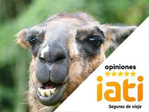 iati-opiniones