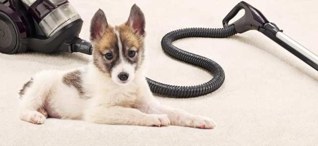 Limpiar pelos de mascotas con aspiradoras antialérgicas