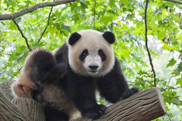 contorno-de-ojos-amigas-panda