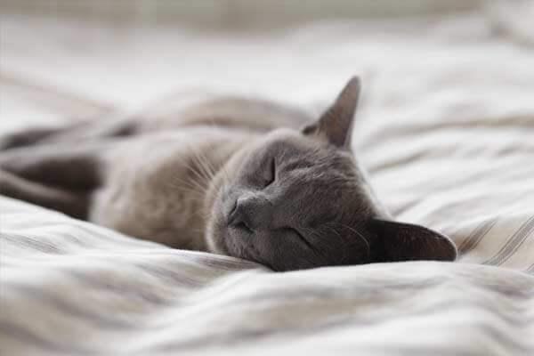 horas de sueño necesarias